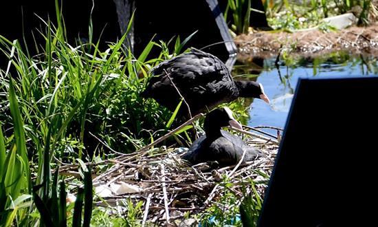 Recycled Park CUR wildlife