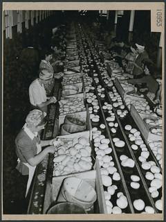 Women working in a factory where potatoes are dehydrated, Kentville, Nova Scotia / Femmes travaillant dans une usine où les pommes de terre sont déshydratées, Kentville (Nouvelle-Écosse)