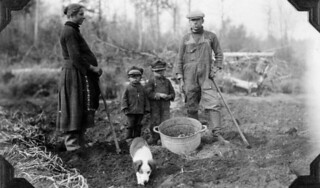 A family harvesting their potato crop, Manitoba / Famille récoltant ses pommes de terre (Manitoba)