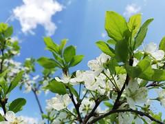 Spring manifestation