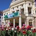 Slovak National Theatre & Tulips, Bratislava, Slovakia