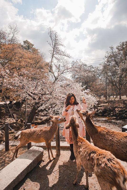 nara deer park - kansai itinerary