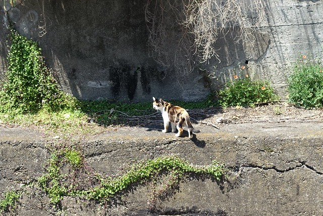 Today's Cat@2019-05-11