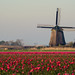Tulips and a windmill by NerG Photography