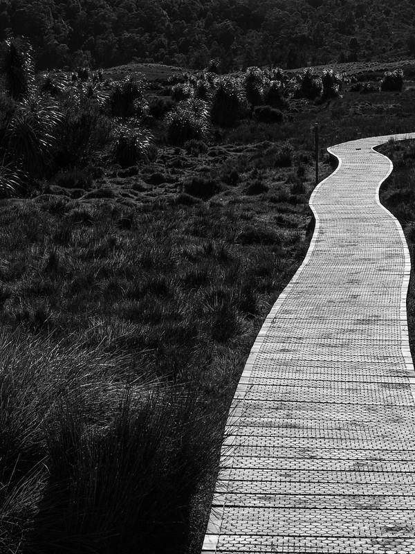 Wooden path and pandani