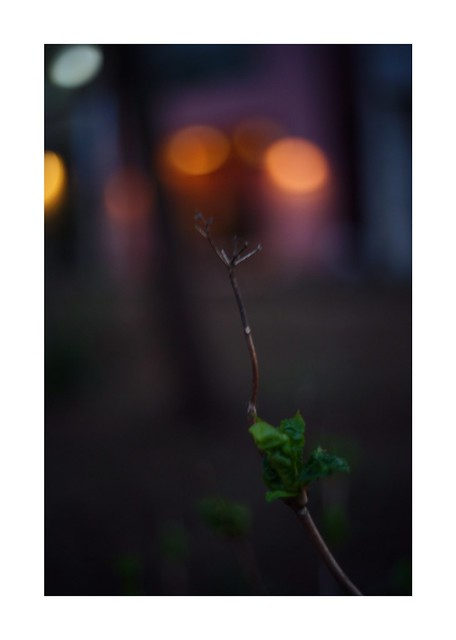 2019/3/31 - 21/21 END. photo by shin ikegami. - SONY ILCE‑7M2 / Voigtlander NOKTON CLASSIC 40mm f1.4 SC VM
