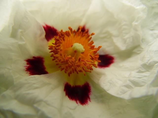 Dans la fleur.. Inside the flower...