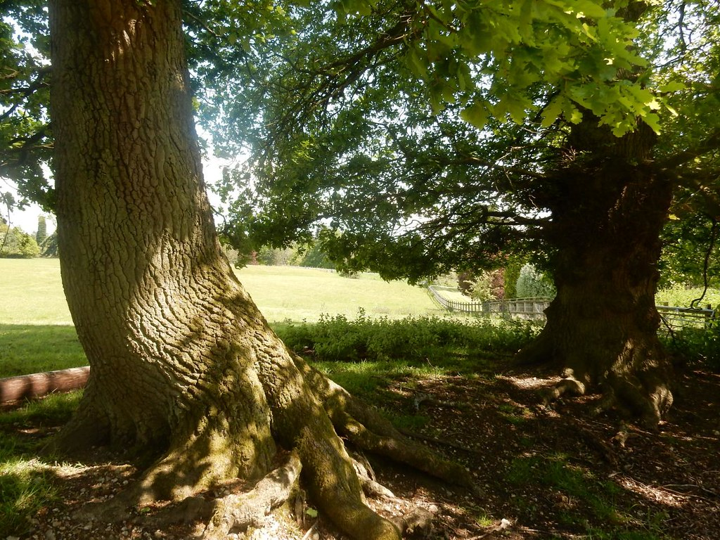 View through trees Aldermaston to Woolhampton