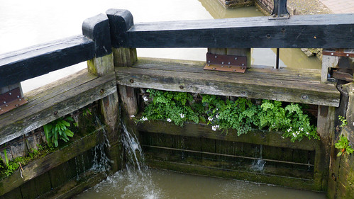 Lock gate vegetation, Straford on Avon