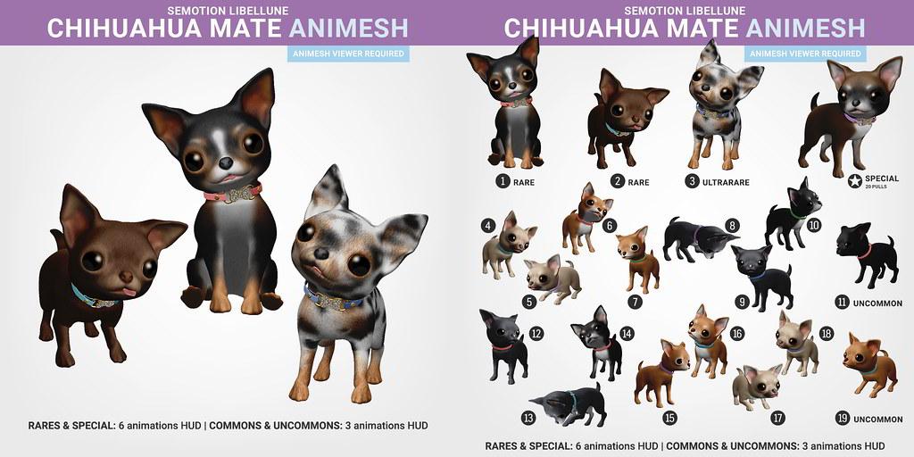SEmotion Libellune Chihuahua Mate Animesh