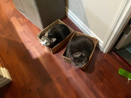 Watson & Crick in boxes