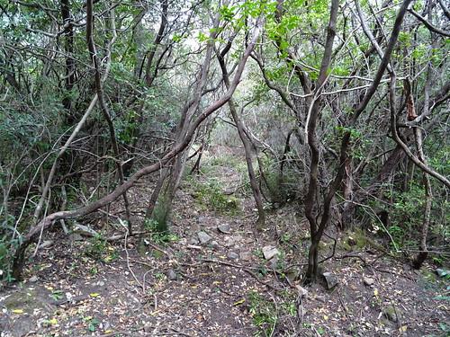Le chemin de Luviu : entre les deux plateaux herbeux (non nettoyé)
