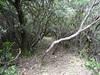 Le chemin de Luviu : au départ après le 1er plateau herbeux