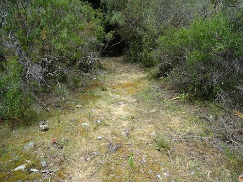 Le chemin de Luviu : arrivée au 1er plateau herbeux