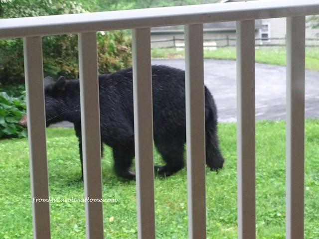 Bear visit at FromMyCarolinaHome.com