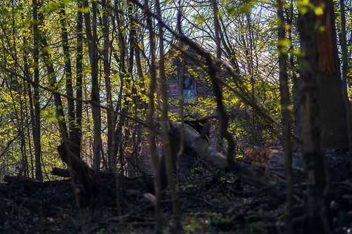 decatur fredrussforestpark michigan us unitedstates closeup forest outdoor spring sunny woods murdershack barn building ruraldecay