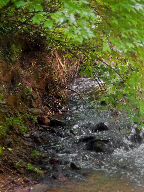 Shoal Creek shoals (02)