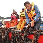 Proyecto GEF-FAO Chile, Adaptación al Cambio Climático, Caleta El Manzano