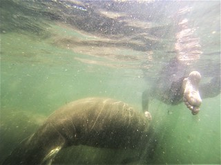 Snorkeling in the Manatee Capital of the World, Crystal River, Fla., April 27, 2019 | by JenniferHuber