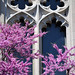 Red bud and window by marensr