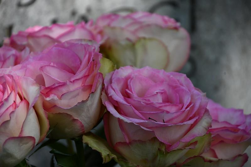Roses 14.05.2019