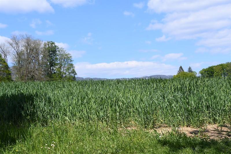 Crops 14.05.2019