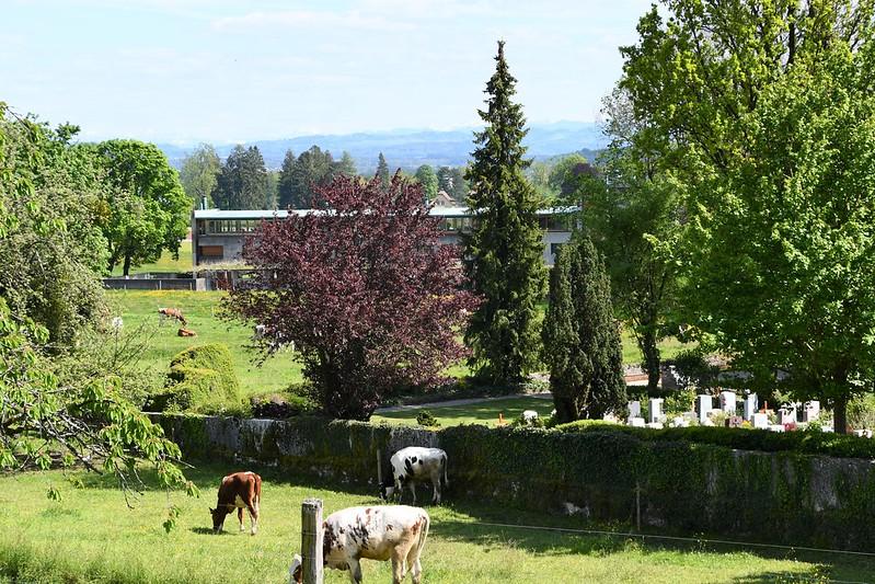 Cows 14.05 (20)