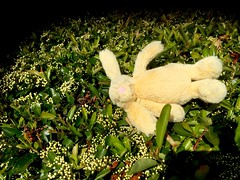 Discarded Bunny
