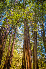 Muir Woods #1
