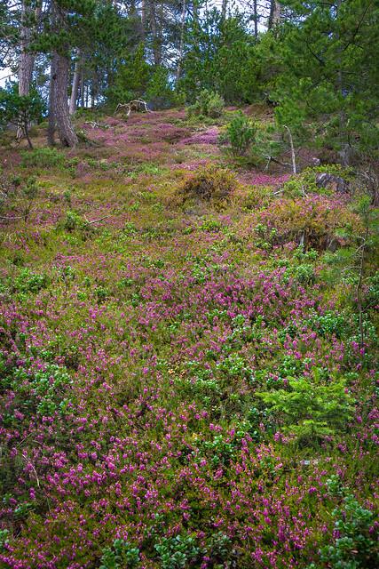 Forêt secteur Bramans (73)