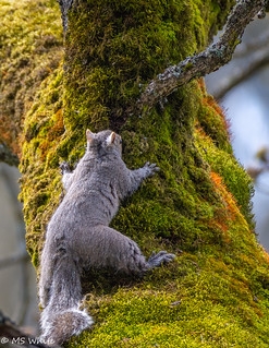 There's a new tree hugger in town.