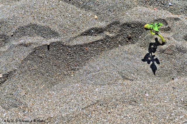 Shadow on the Beach 01