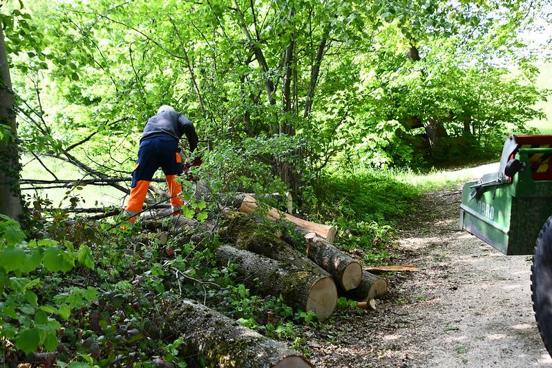 Tree Cutting 16.05 (5)