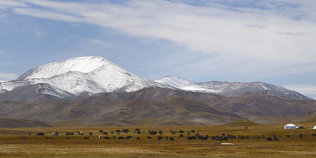Matö county landscape with yak, Tibet 2018