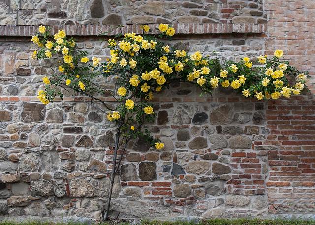 Un giallo a Monteveglio