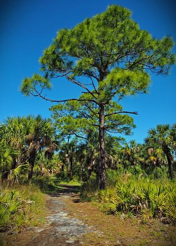 florida portrichey unitedstates tree trees sky park statepark path