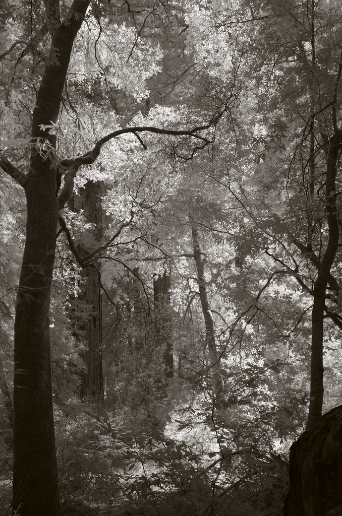 Light in the forest (2)