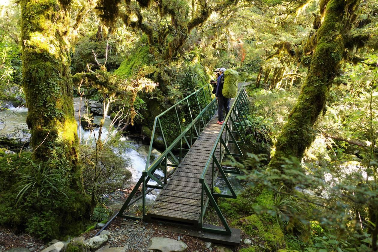 ルートバーントラック 森の吊り橋