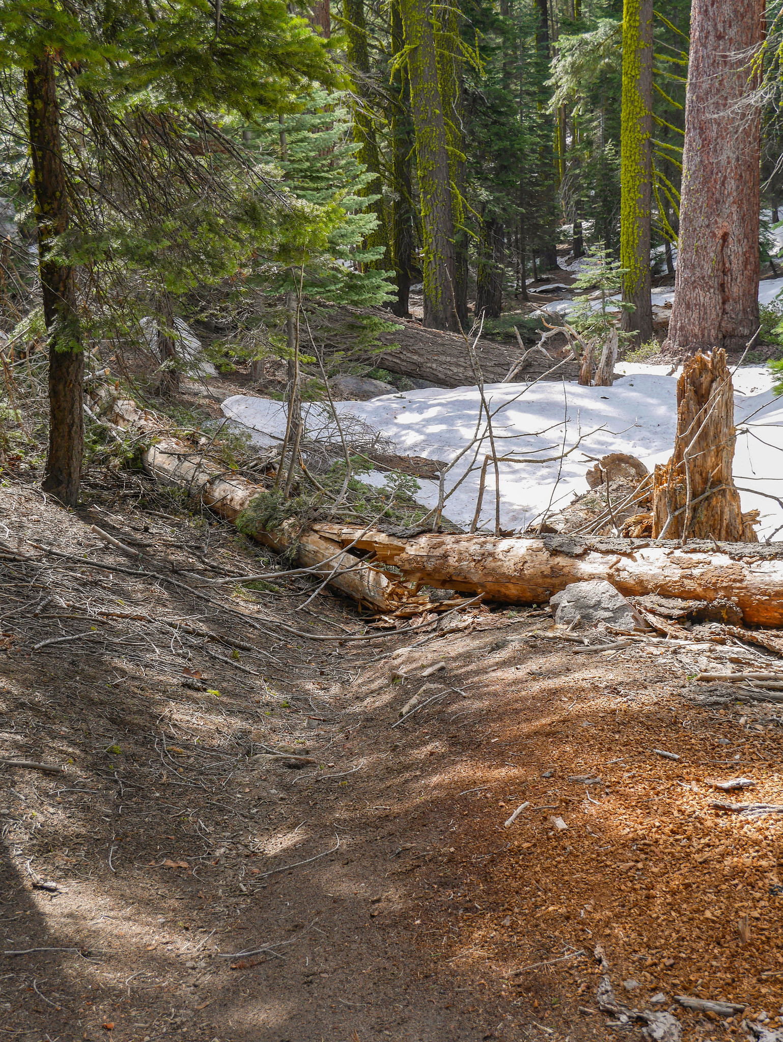 After Dewey Point, the trail condition detioriated significantly