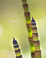 Snake Grass 9469