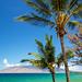 tropical aloha by PIERRE LECLERC PHOTO