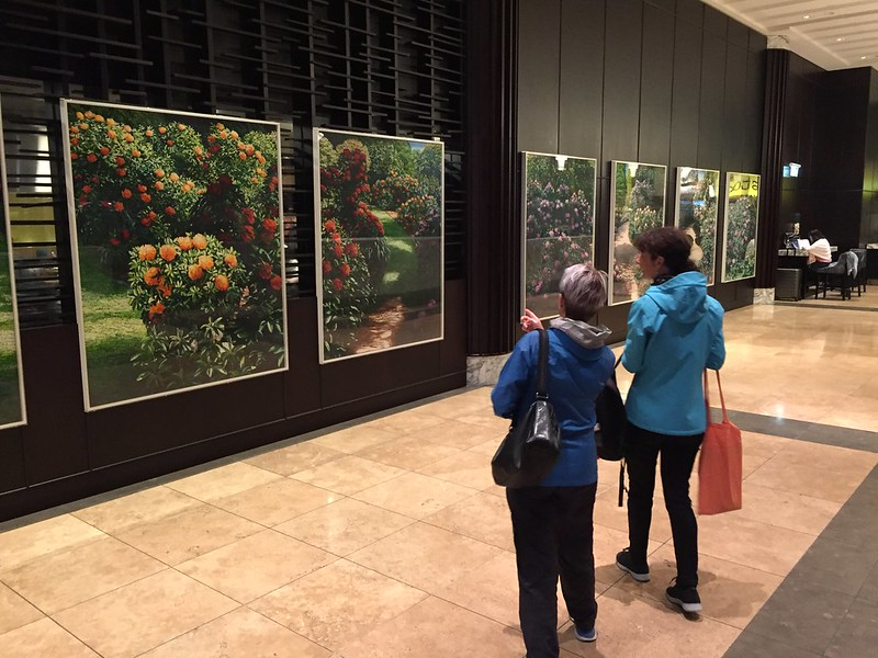 Auckland Walking Tours with Aucky Walky - paintings by Karl Maughan
