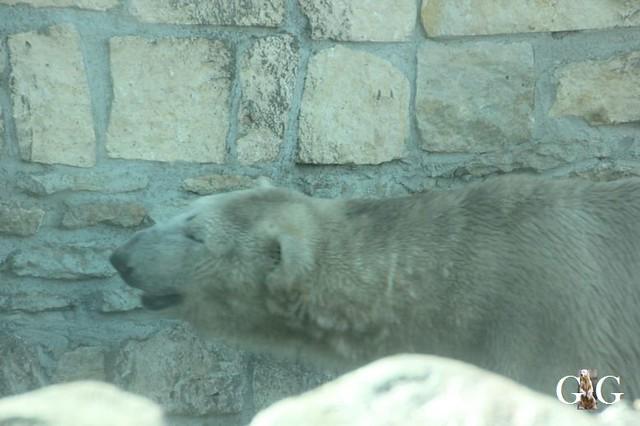 Besuch Zoo Tallin 27.04.201955