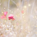 """""""Pink poppy surrounded by fairies..."""""""