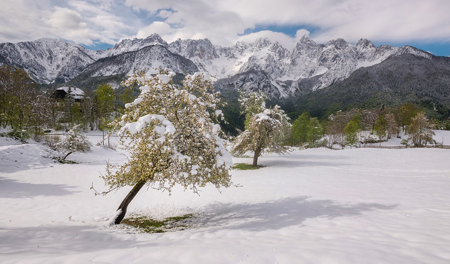 Fresh snow in the mountains while the trees are already in full bloom