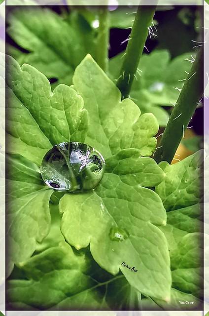 Rain drops, ☔💧