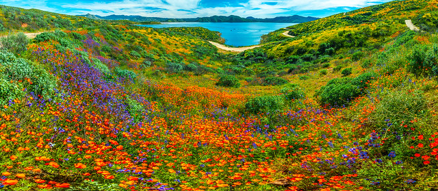 Epic High Res Multishot Panormama Stitched in Lightroom! Sony A7R III & FE 16–35 mm G Master Wide-Angle Zoom Lens! Diamond Valley Lake Wildflower Trail Wild Flower Super Bloom! California Wildflowers Superbloom Fine Art Photography! Elliot McGucken Art