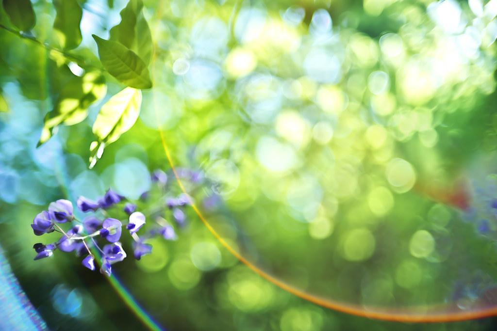wisteria #2
