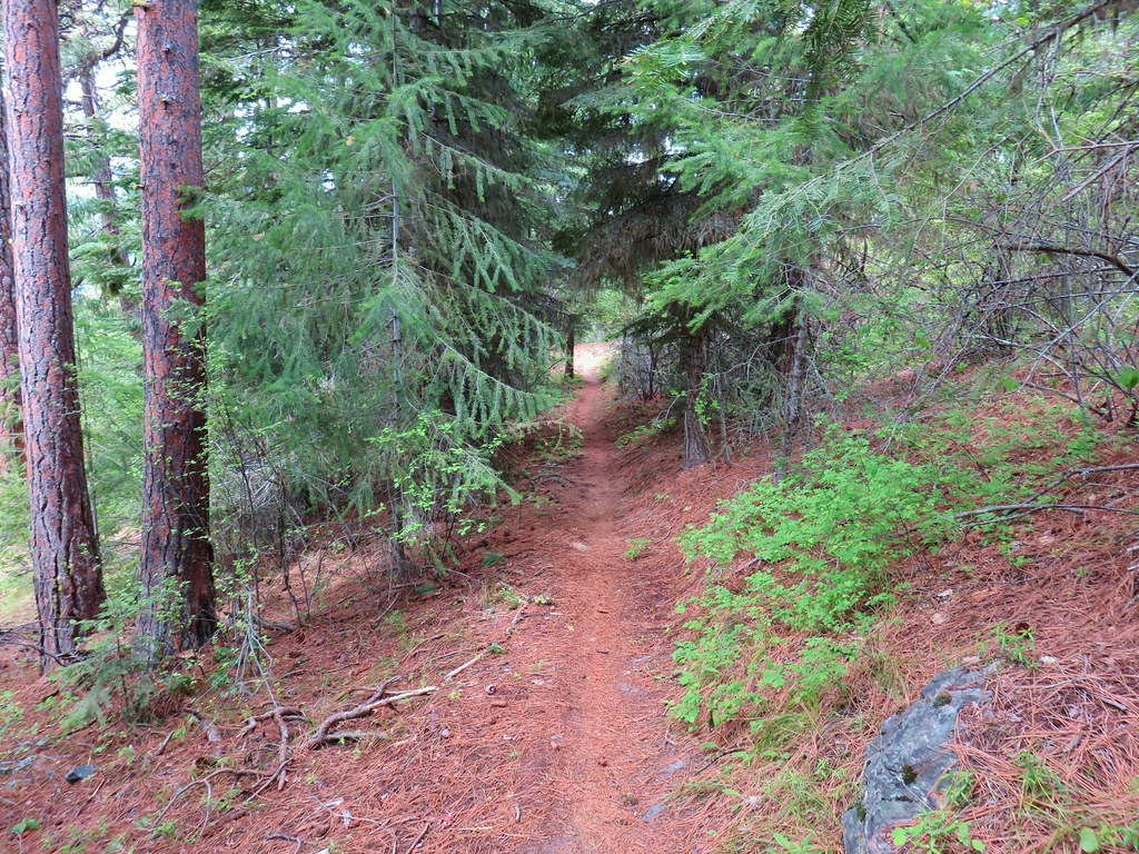 Trail connecting Forest Road 620 to the Dog River Trail