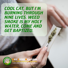 Cool Cat, but I'm Burning Through Nine Lives.